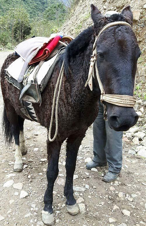 Loco Horse