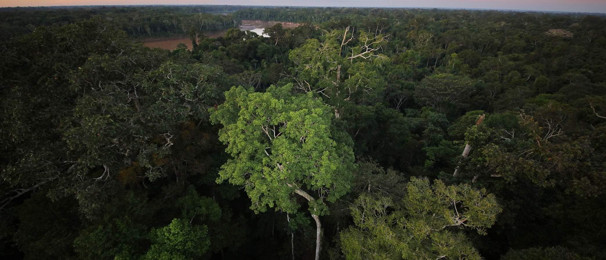 Rainforest Tour